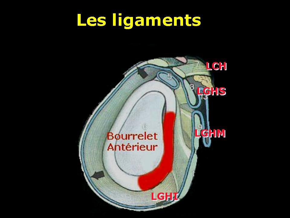 bourrelet3